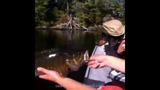 Crusoe Dachshund Fishing Vines Compilation