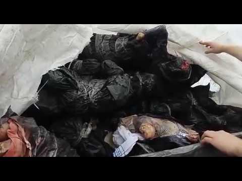 Державна прикордонна служба України: Двоє українців трактором намагалися перемістити через кордон в Росію 3 тонни м'яса