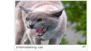 Google Translate Fails Cat Article in Japanese Wikipedia