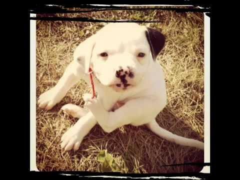 Pitbull Puppy Name Ideas?