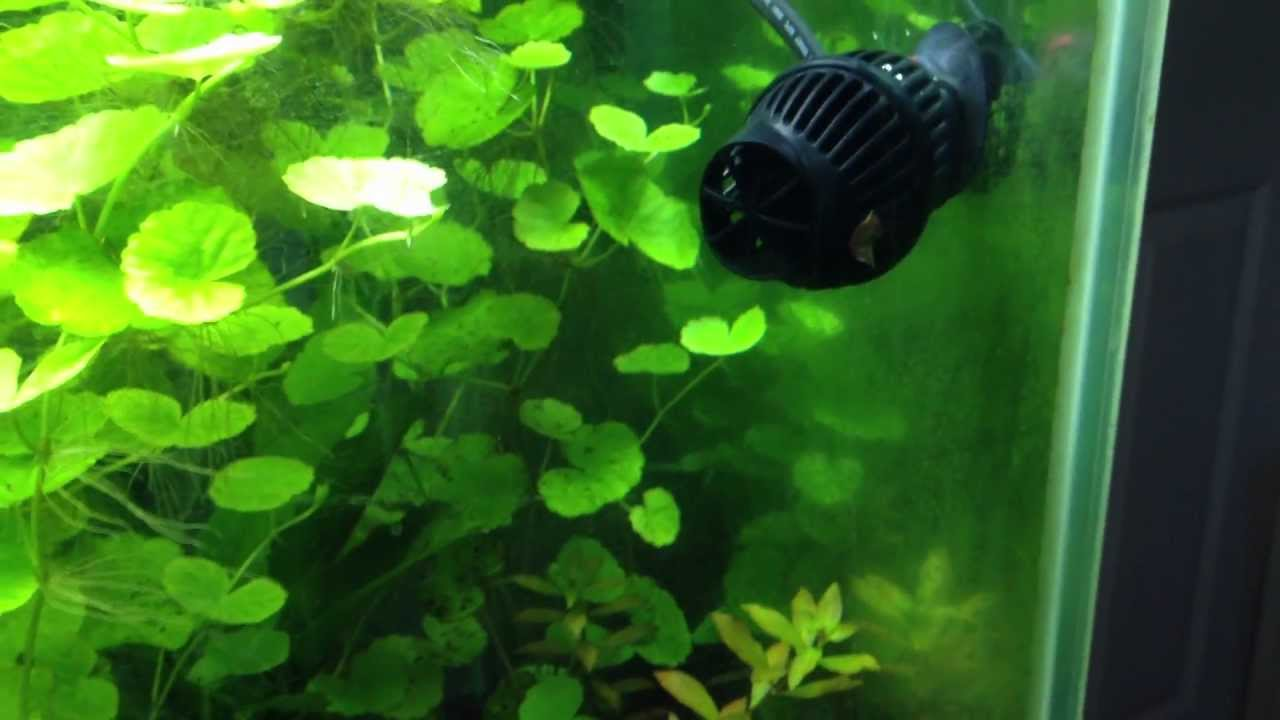 Water Circulation In A Planted Tank Hydor Koralia 240
