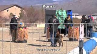 Mondio Ring Trial Obedience Las Vegas Puma