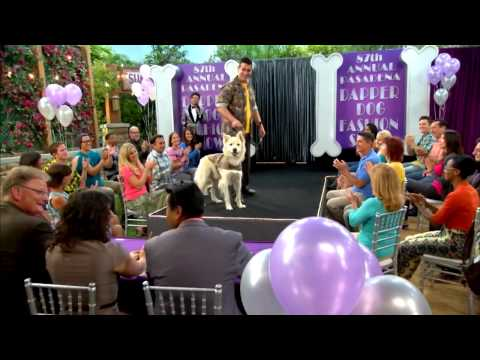 Dog With A Blog - On The Catwalk