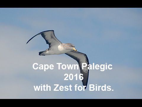 Cape Town Pelagic with Zest for Birds 20/03/16