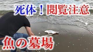 【千葉】青潮の海に行ったら魚食い放題でした【ドキュメンタリー】