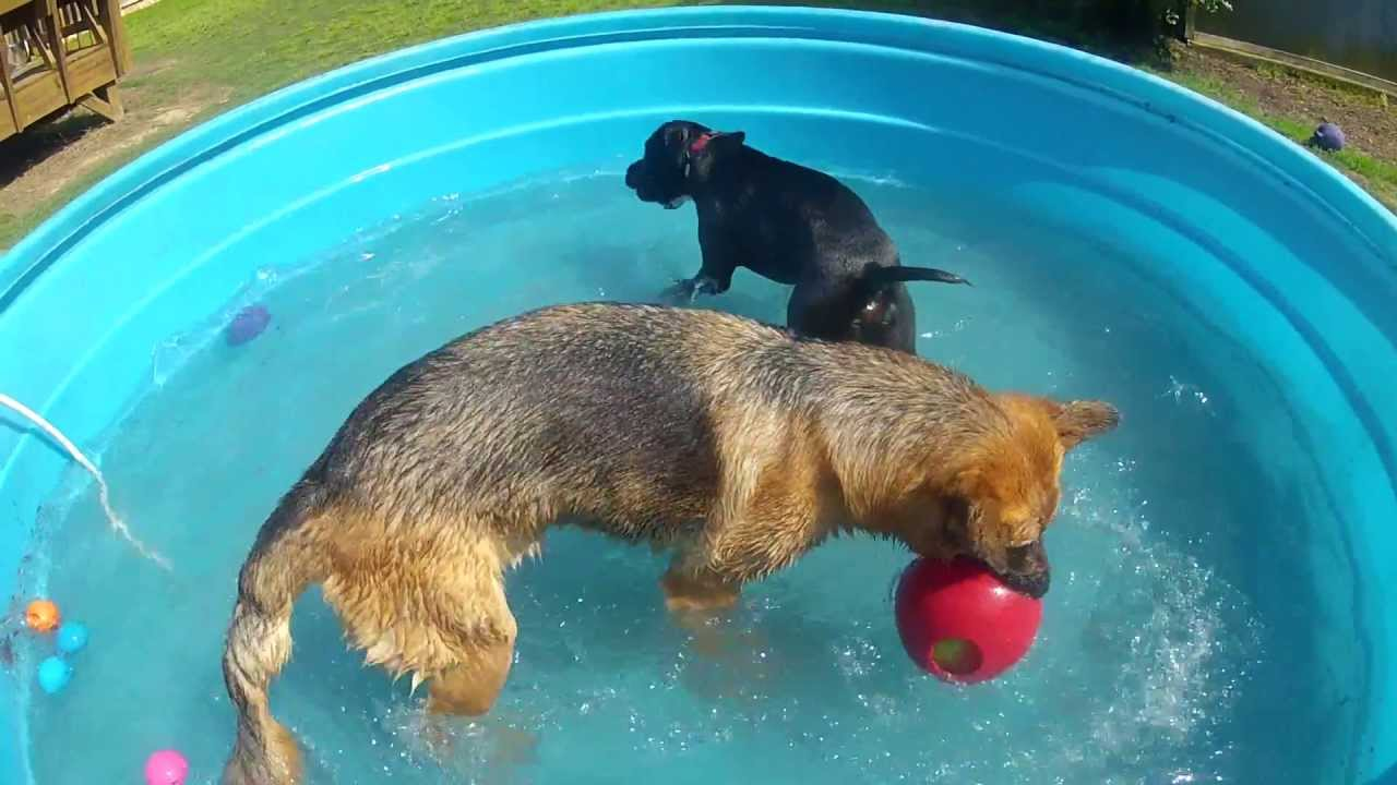 Gopr0044 Poly Stock Tank As A Doggie Pool Gsd S And Pit
