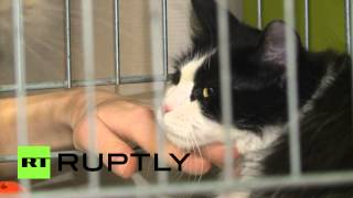 В Петербурге раздали эрмитажных котов