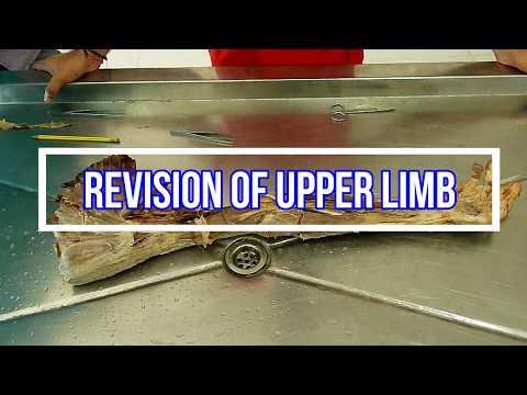 Revision of Upper Limb
