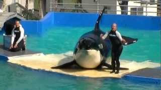 2012-11-10 - Miami Seaquarium Killer Whale Show (Part 3) [1080p]