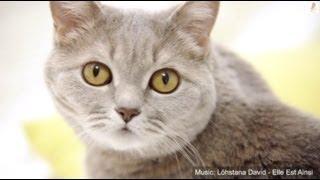 OFF-cooking - моя кошка Леся - котобонус
