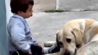 Labrador mama take care of a child with down syndrome
