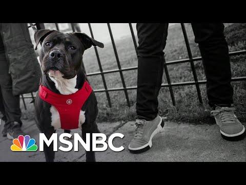 Shelters See Record Dog Adoptions During Coronavirus Quarantine | The 11th Hour | MSNBC