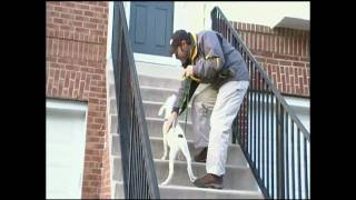 """""""how To Teach A Dog To Go Up And Down Stairs"""" By Bobs Pet Stop"""