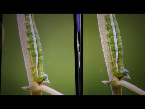 1080p vs 1440p pixels full
