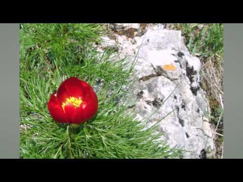 Цветы в крыму 41