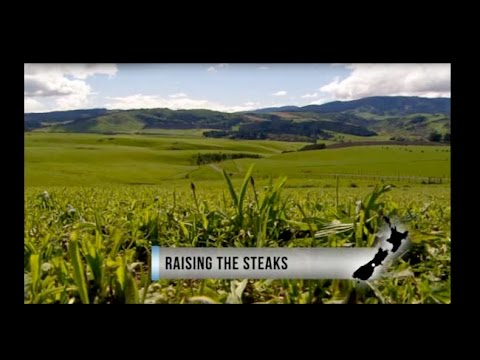 Country Calendar - Raising the Steaks - Kakahu Angus