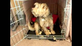 Murphy Crate Training 2012 - Old Footage