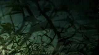 DJ Shadow - The Tiger (Music Video) (HQ)