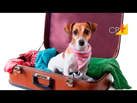Rotina de um Hotel para Cães e Gatos: Recepção