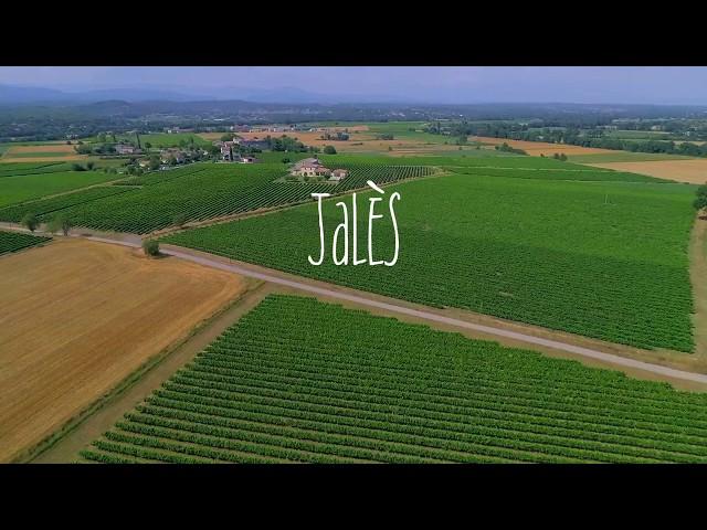 Un vignoble à Jalès