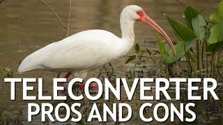 Teleconverter Pros and Cons