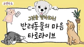 10/16 조앤타로 동물농장-반려동물/반려초심리타로
