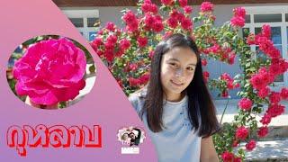 ดอกกุหลาบสวยๆ ในสวนหลังบ้านเอมี้ก็มีนะค่ะ🌹🇨🇵
