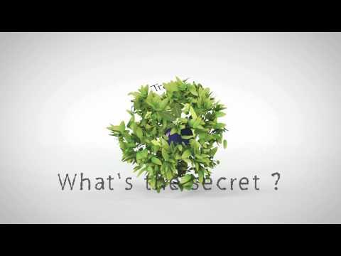 Olive Tree logo animation