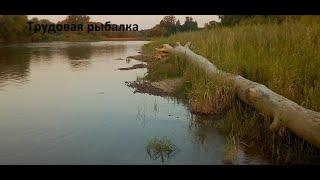 ПЕРЕКИДАЛ ВСЕ!ТРУДОВАЯ РЫБАЛКА В АВГУСТЕ.Щука,окунь на спиннинг.Река Бия.