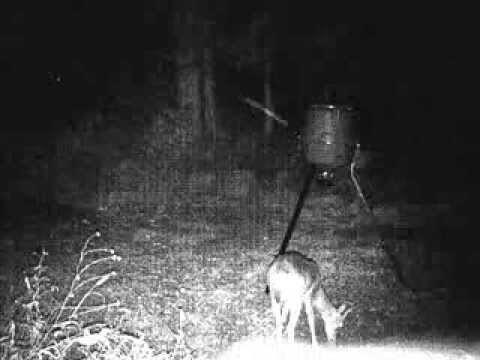 Ghost Caught On Deer Cam Watch To The End Youtube