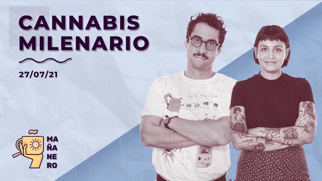 CANNABIS MILENARIO  / MAÑANERO EL MATINAL