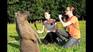 Охотник берёт интервью у сурка. Прикол