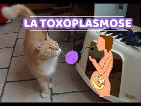[Gnocky] La Toxoplasmose : La Femme Enceinte Et Son Chat