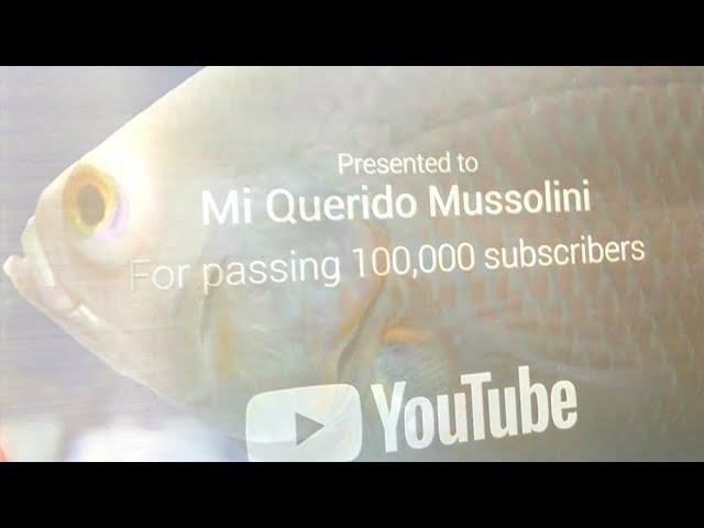 MOMENTO GLORIOSO: Llegó el botón de plata de Mussolini