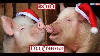 Год Свиньи 2019 - удачи и процветания в Новом году!