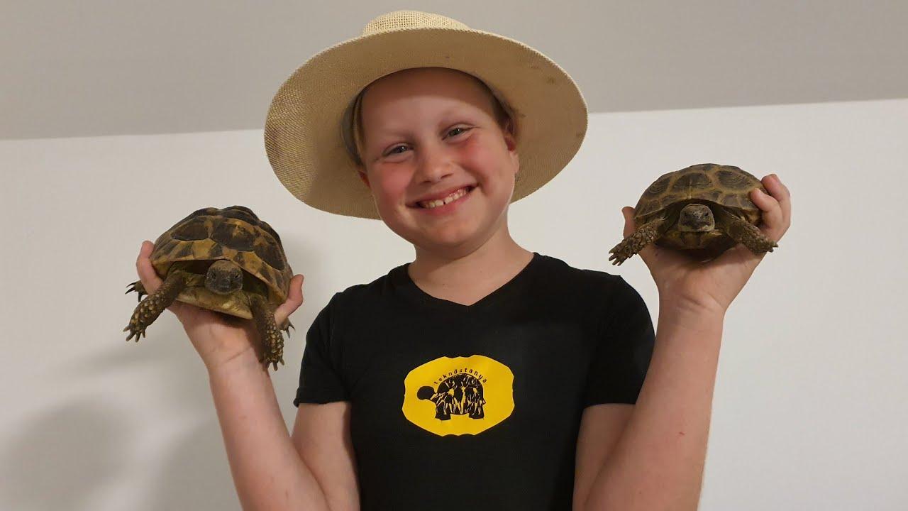 mikor teknős fogyott
