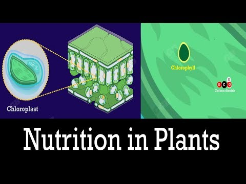 Nutrition in Plants : Life processes : 10th Biology: CBSE Syllabus : NCERT X Science