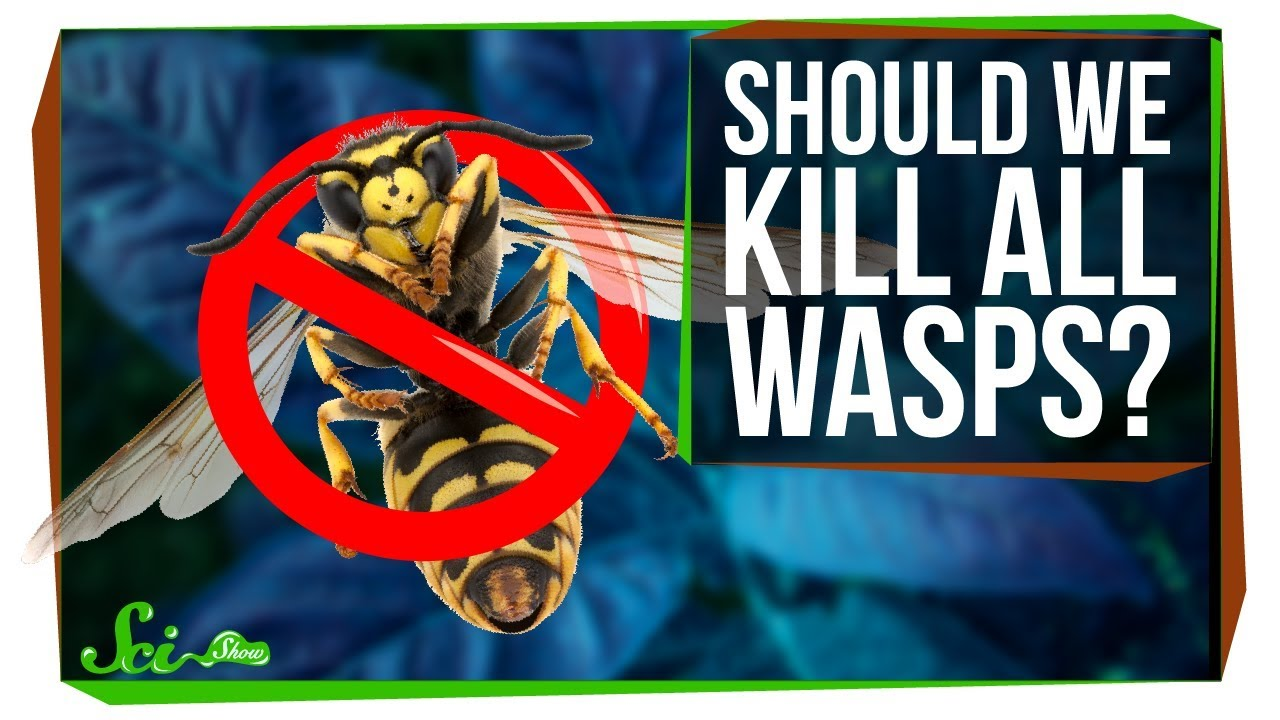 what-if-we-killed-all-the-wasps