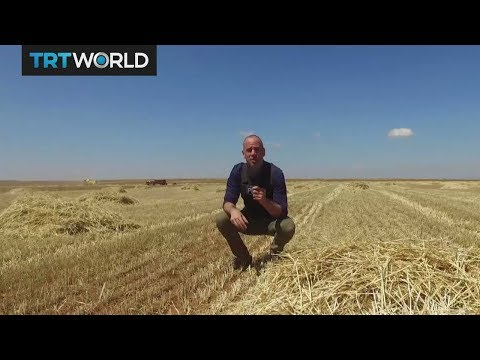 The War in Syria: Crops harvested on land once held by Daesh