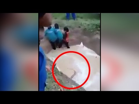 Girls forced to swim with python in Malaysian 'motivational camp', watch video | वनइंडिया हिन्दी