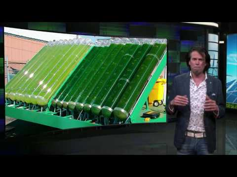 Bioenergy Potential - Sustainable Energy - TU Delft