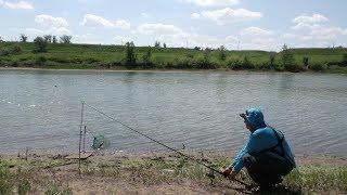 Крупный Карась отрывает крючки . Рыбалка летом на фидер на реке