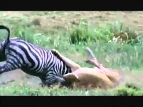 أقوى عشر هجمات للحيوانات المفترسة