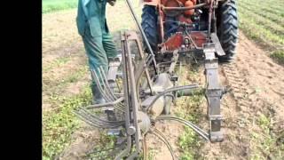 Трактор Т 16 МГ У1 картофель част 2 2013.