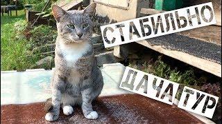 ДАЧА ТУР Товарища Сафронова со Стабилизатором Zhiyun smooth 4
