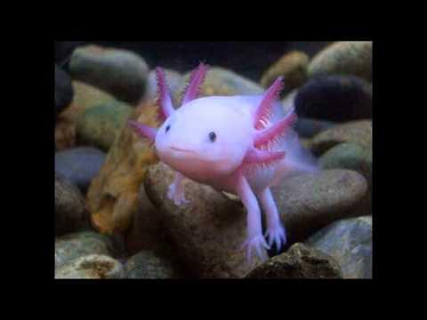 светящиеся рыбы — новые прикольные фото, анекдоты, видео
