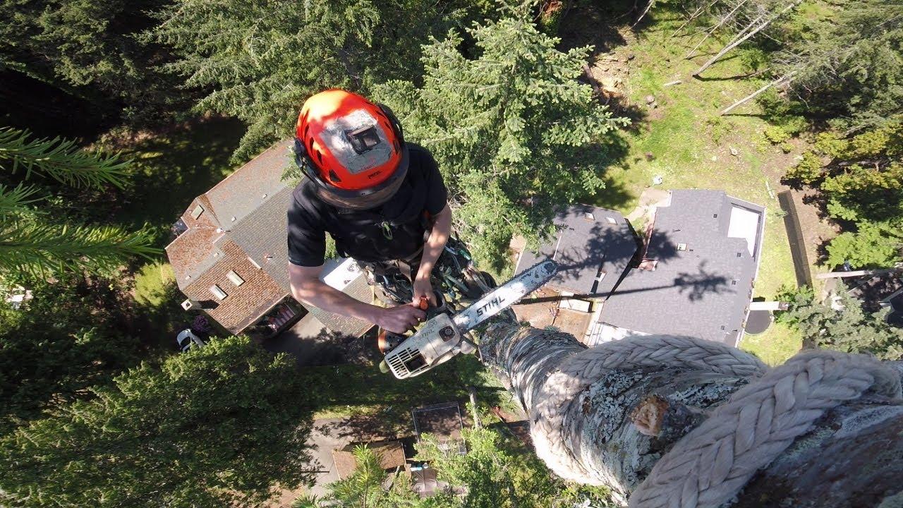 Tree Rigging - Vertical Zipline