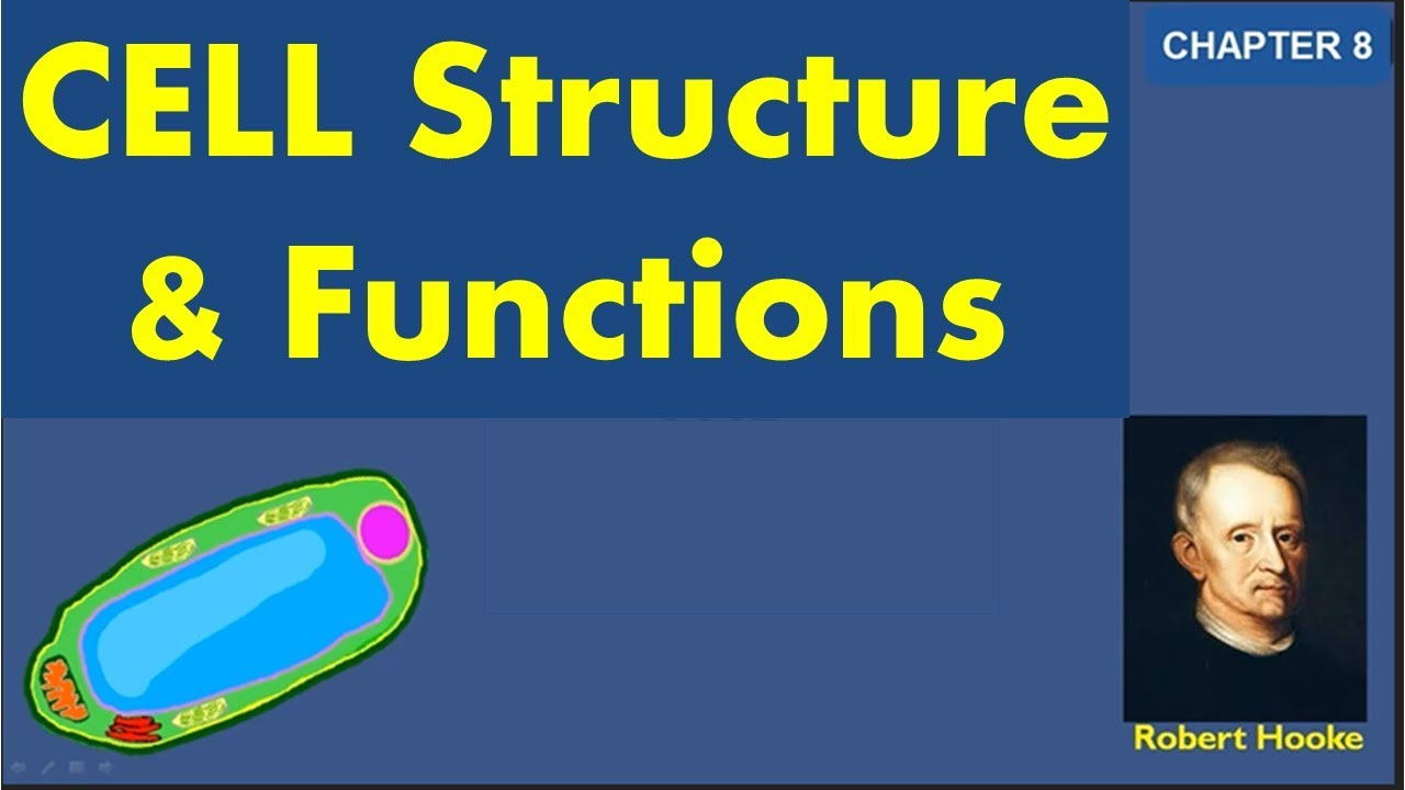 Cell Structure and Function Class 8 Notes, Question Answers