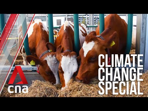 The Netherlands: Floating Farms And Homes | Climate Change Special