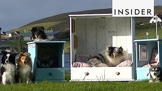 Sheltie Shacks Turns Dressers Into Dog Beds